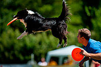 Rep�l� kuty�k a Haj�gy�ri-szigeten
